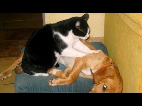 Why do cats massage people some cats really love to massage and pet