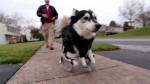 dogprosthetics