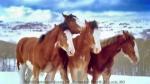horsefight