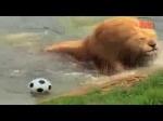 lion-el-messi