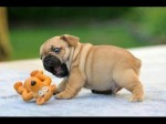 puppycompilation2014