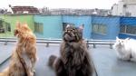 chatteringcats