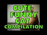 cutefunnycatcompilation
