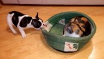 dogfightbed