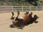 horsegas