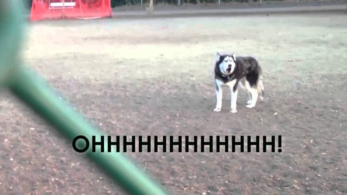 Dog In Park Who Doesn T Want To Go Home