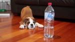 puppybottle