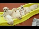 puppyslides