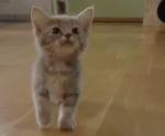 Chatty Kitten