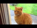 Bruno the cat lets his owners know he wants in by ringing the doorbell. He only does it when he knows the owners are awake and not in bed, so the bell never goes off at 4 in the morning. Smart cat.