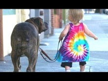 Babies Taking Dogs For A Walk