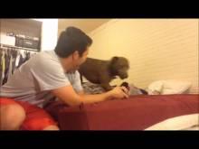 Dog meets baby kitten
