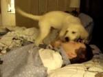 Cute Puppy Wake Up Call