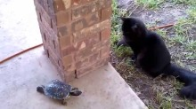 The Cat and the Turtle
