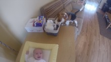 Cute Dog knows how to help mom with changing baby's diaper like a PRO!