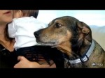 Hero Rescue Dog Duke Saves Dying Baby