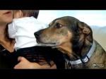 Hero Rescue Dog Duke Saves Dying Baby
